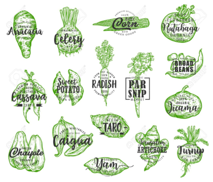 Organic food, vector vegetables silhouettes and lettering