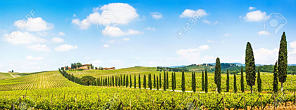 Tuscany landscape with vineyard