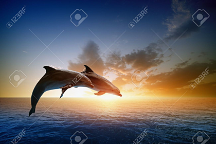 Jumping dolphins, beautiful sea sunset