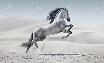 Galloping white pony