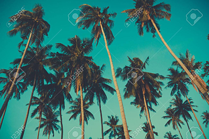 Retro toned palm trees on over sky background
