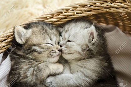Kittens sleeping and hugging in a basket