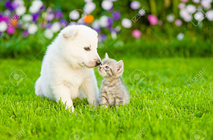 Kitten kissing Puppy sitting on grass wallpaper