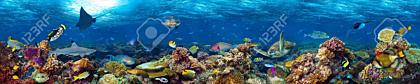 Underwater coral reef landscape
