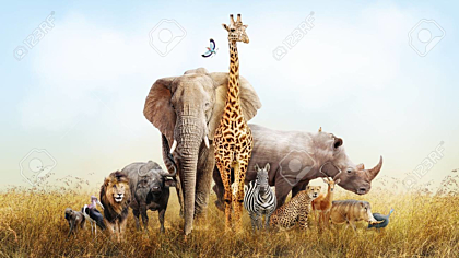 Large group of African safari animals in kenya