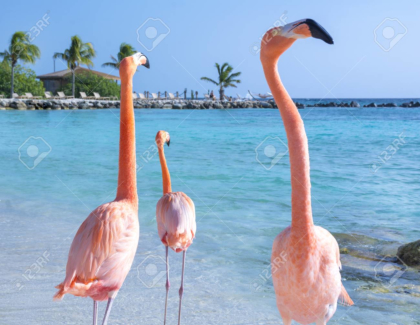 Beautiful flamingos on the beach
