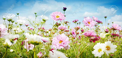 Pink and white flowers growing in a meadow